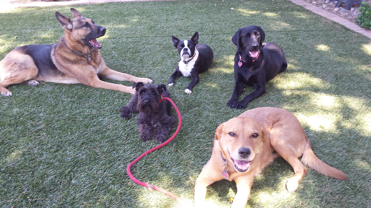 tucson-dog-boarding-facilities2