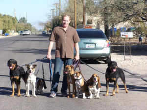 When you walk with confidence, it doesn't matter how many dogs you have - walking on a lead is easy!